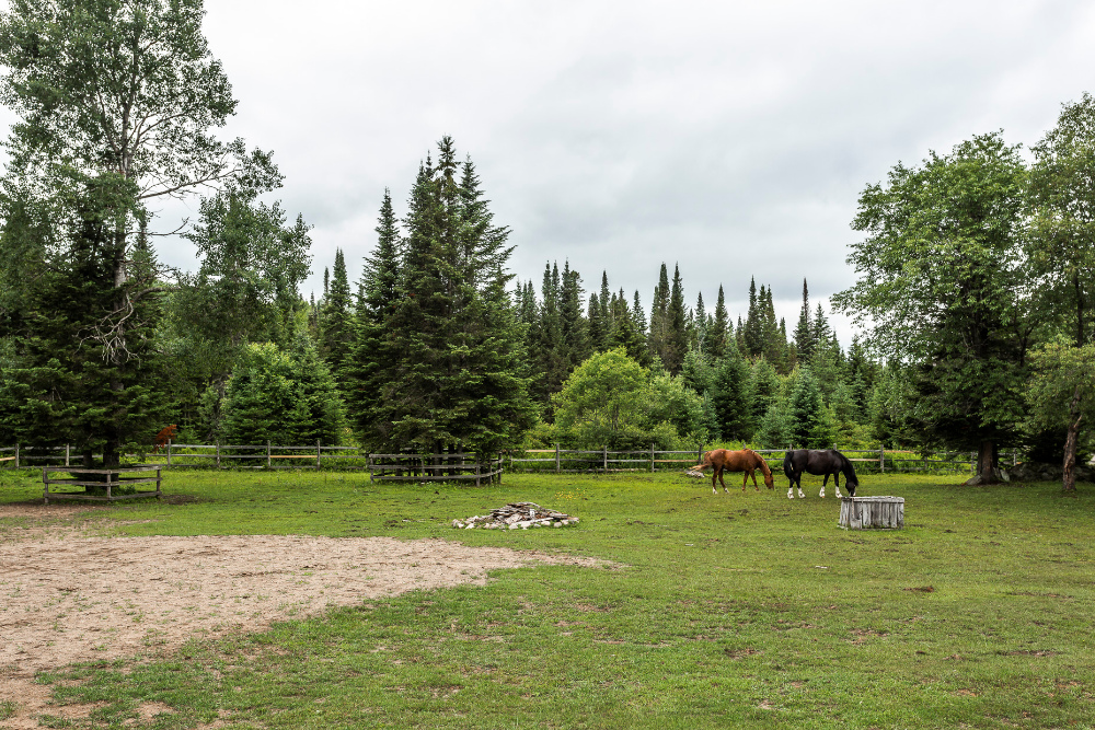 backyard-mont-tremblant-lac-superieur-horses-fence-pine-trees